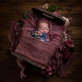 Luna_newborn--7