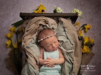 Newborn photography Brereton baby with daffodils