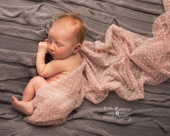Newborn photography Brereton wrapped baby